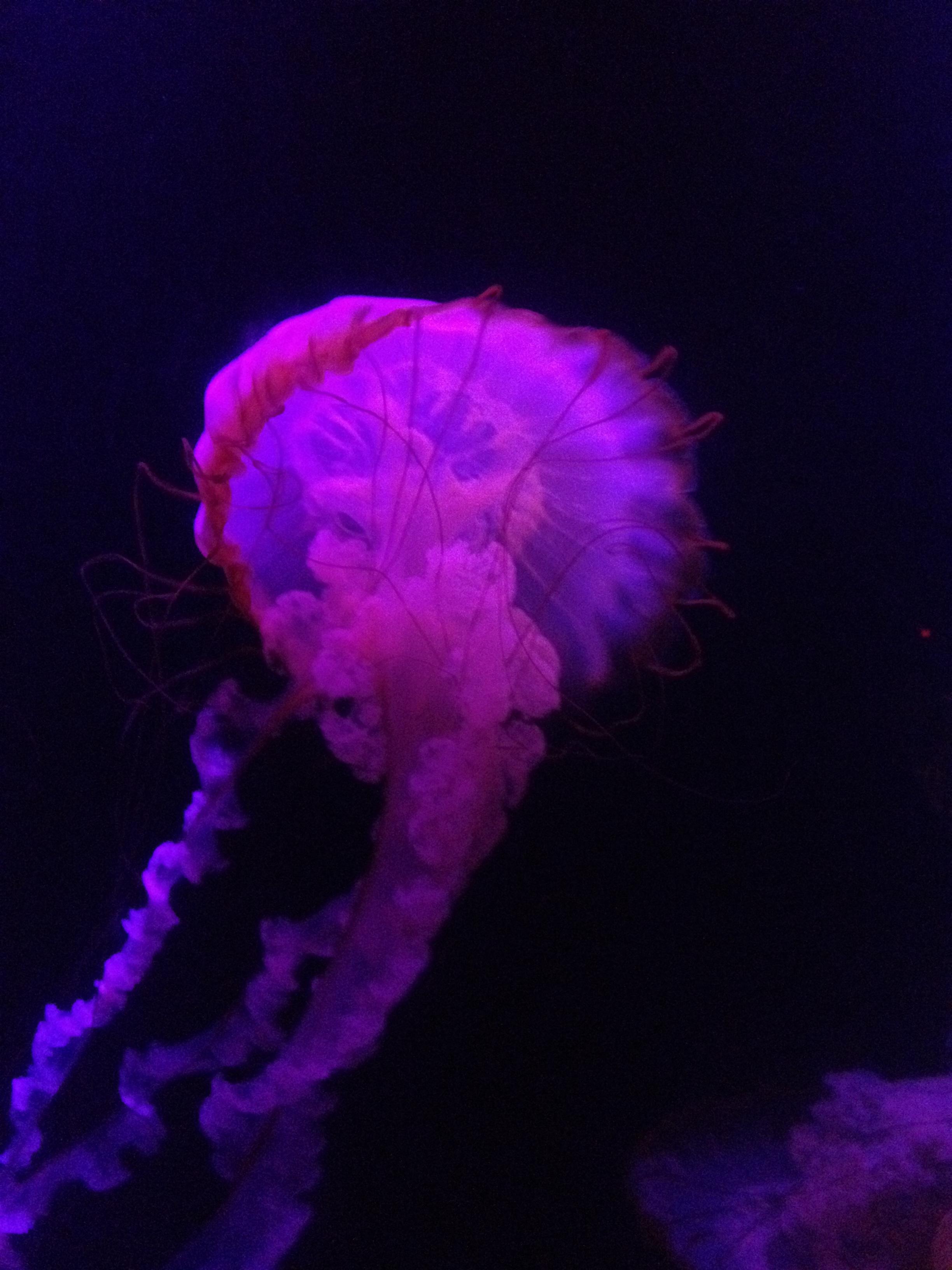 Atlantis Resort Aquarium